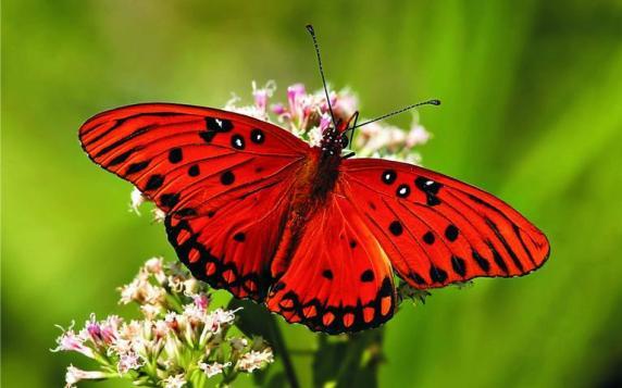 borboletas.jpg