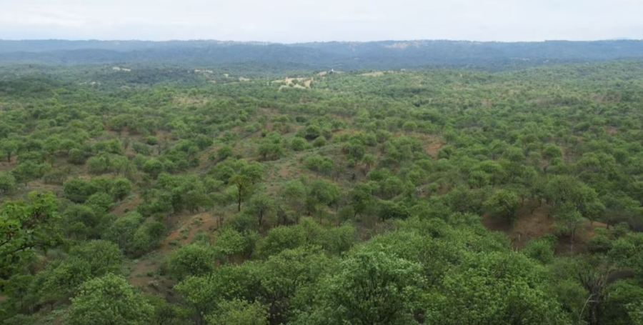 bosque_palo_santo