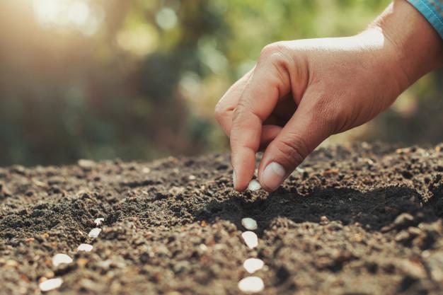 mao-plantando-sementes-de-abobora-na-horta_34152-1279